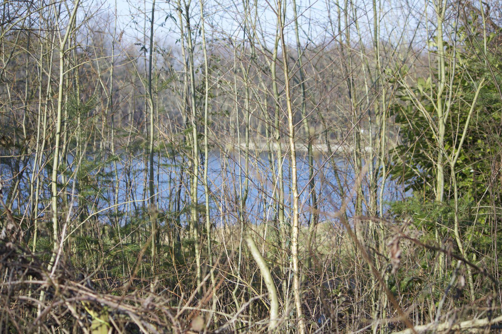 Perceel VILLAGROND 1977 m2 – subliem zicht op de Lac van Loppem